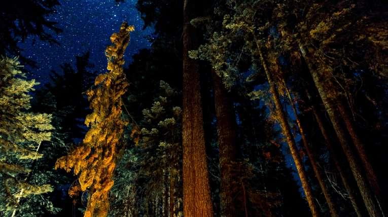 Telttailua tähtitaivaan alla